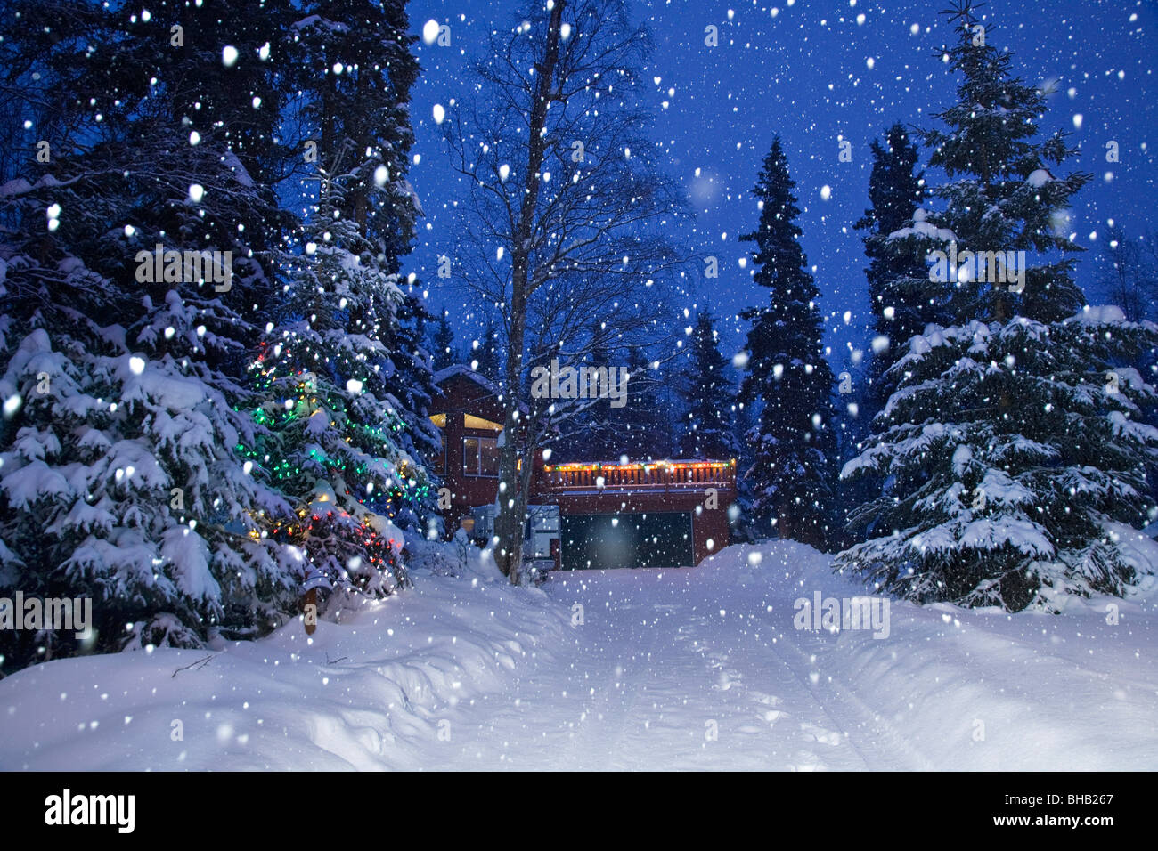 Snow falling on a lit Christmas tree beside a snow covered driveway Stock Photo, Royalty Free ...