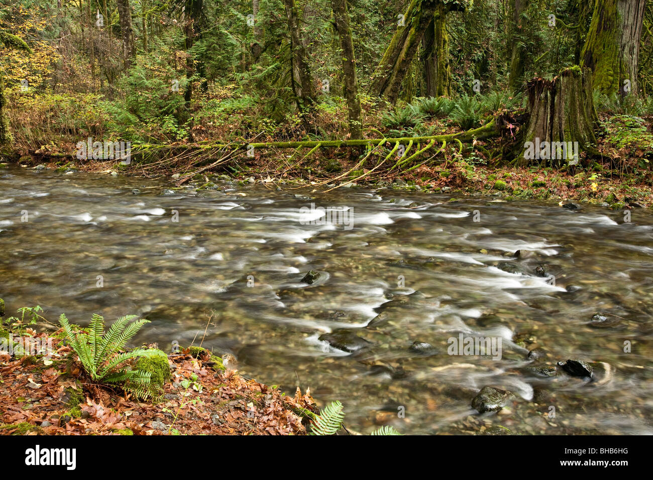 Salmon Run Vancouver Island Bc