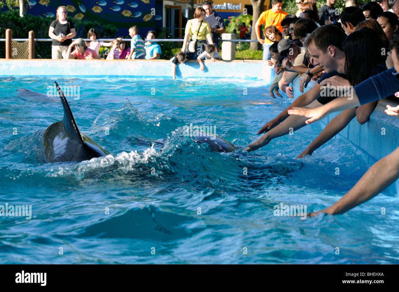Visitors Feeding Dolphins At Seaworld San Antonio Texas Usa Stock Photo Royalty Free Image