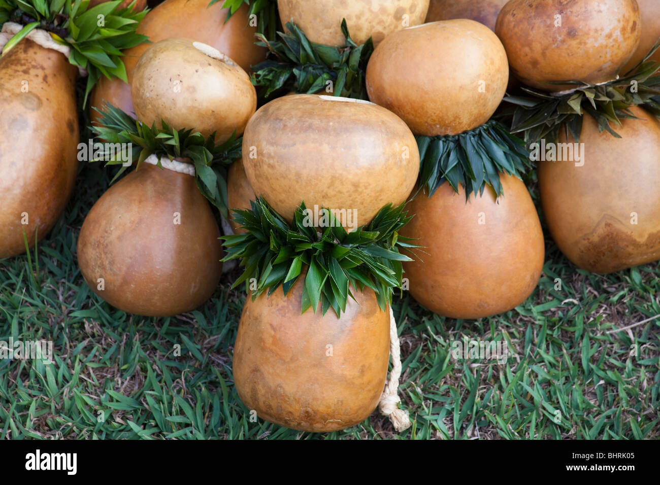 collection of hawaiian ipu hekes before a performance in royalty free vector graphics royalty free vector graphics