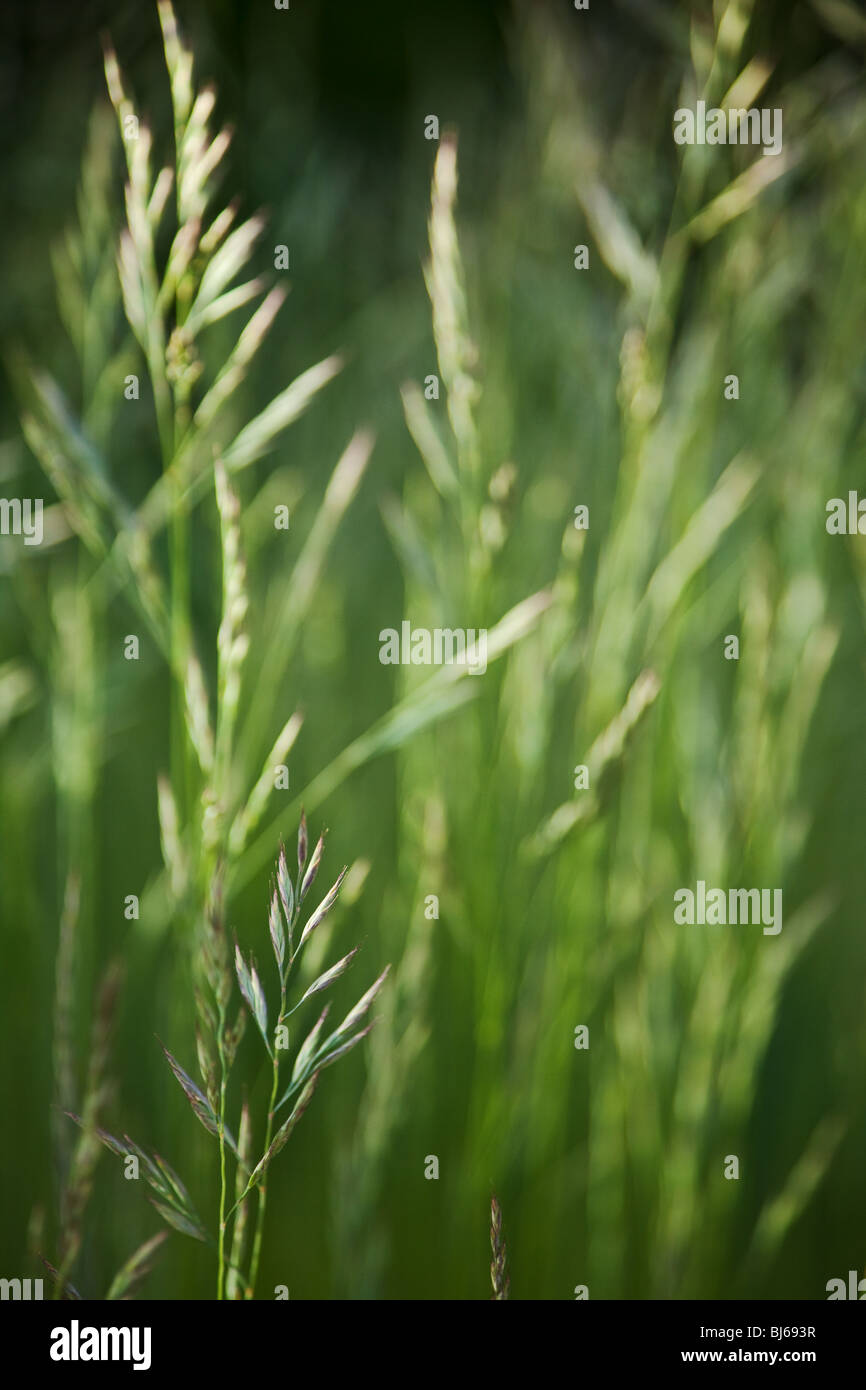 green grass background Stock Foto