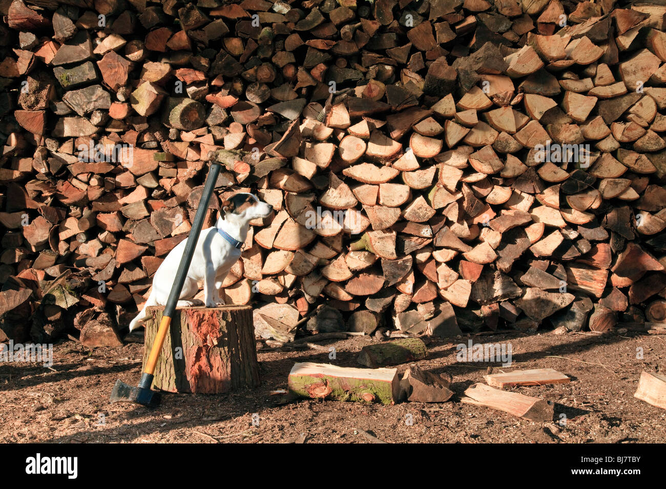 a-pile-of-logs-for-firewood-BJ7TBY.jpg