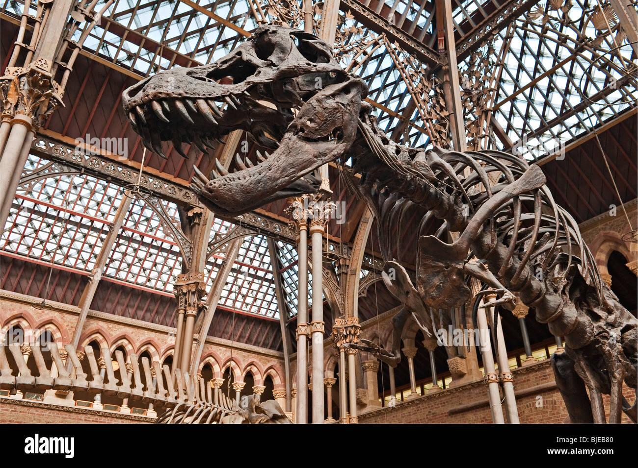Natural History Museum Dinosaur Fossils