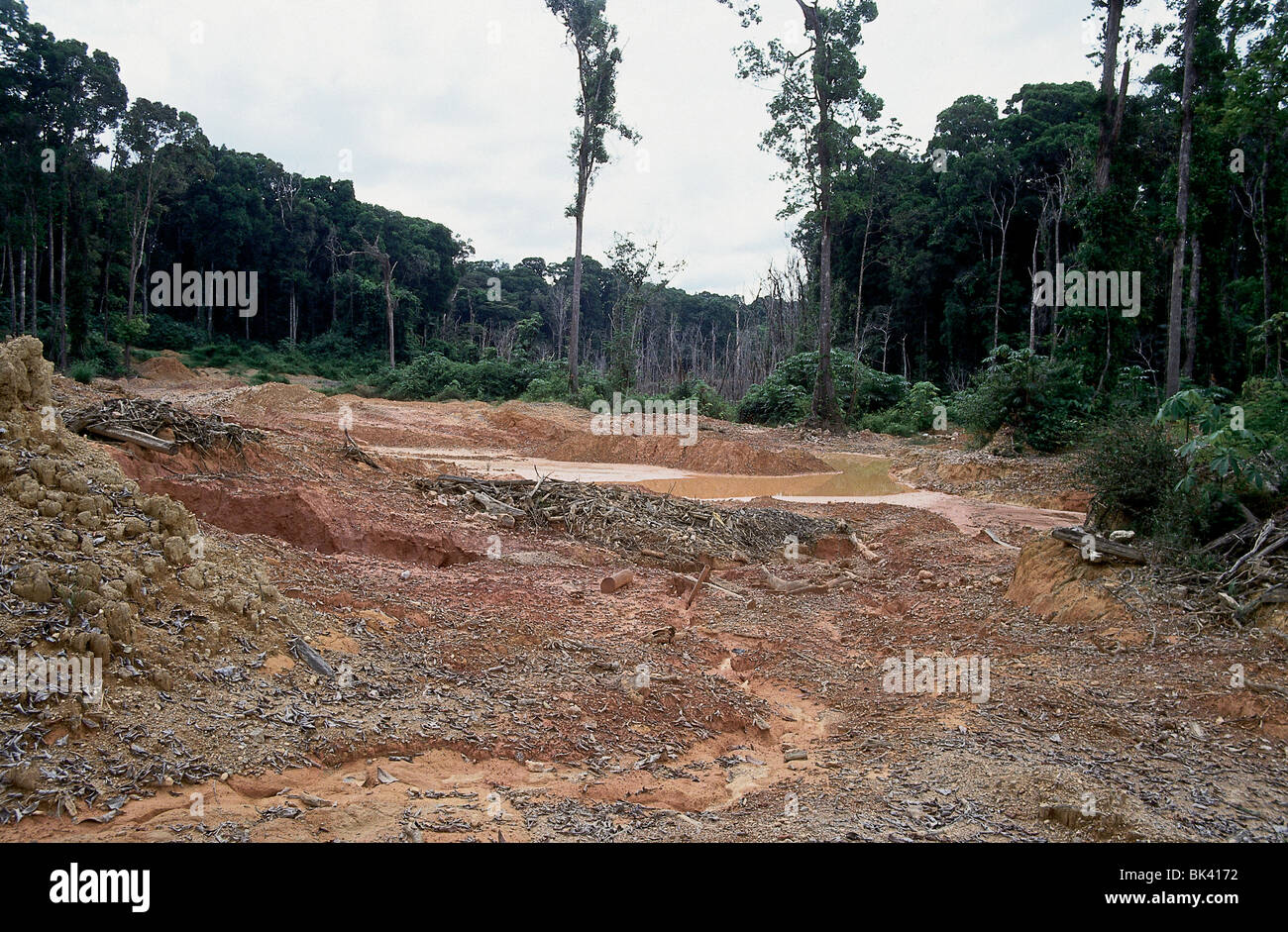 An analysis of the issue of gold mining in the amazon tropical rainforest region