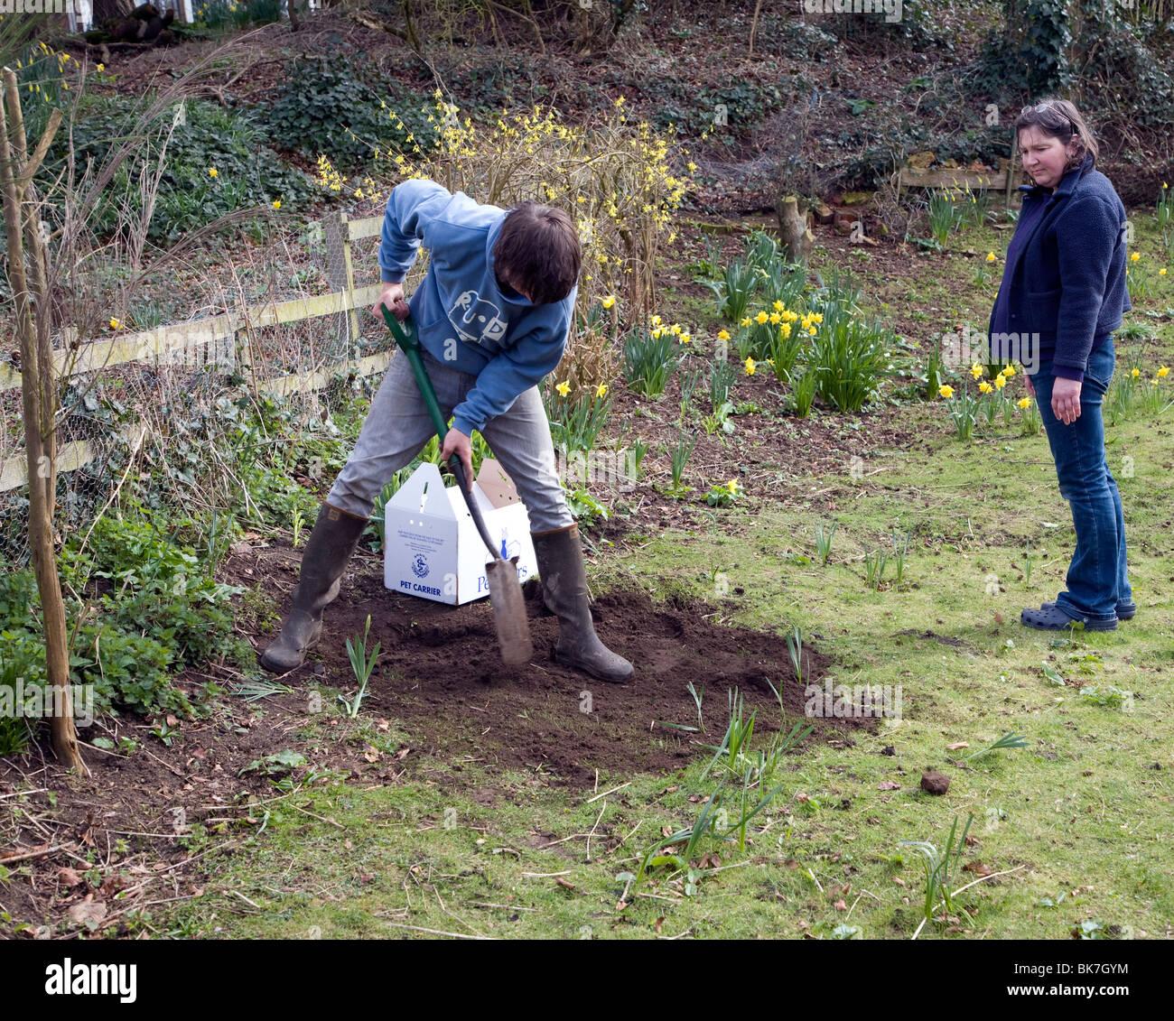 Model released teenage boy digging hole in garden to bury pet cat Stock Photo
