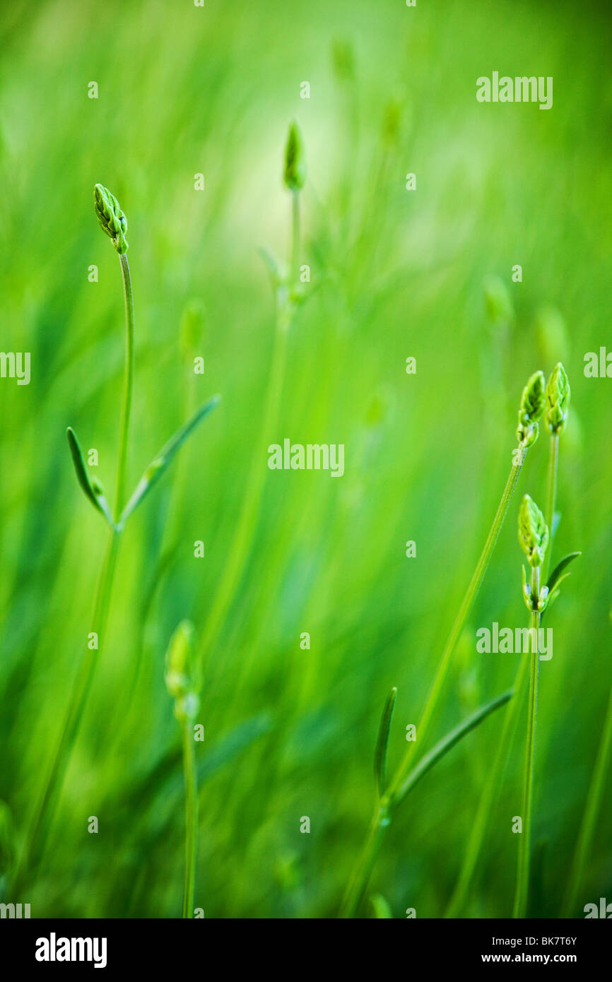 green grass field background with selective focus Stock Foto