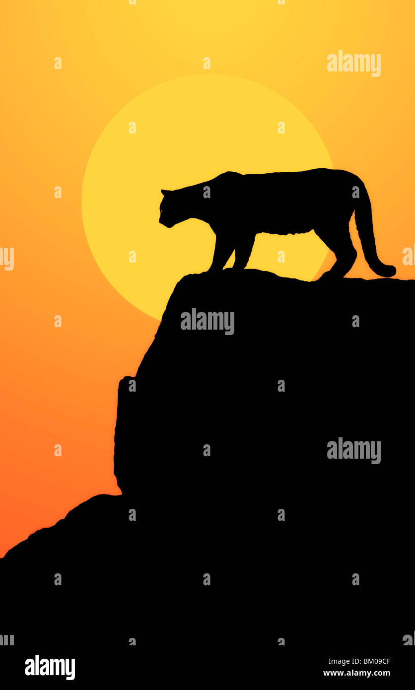 Mountain lion in silhouette on the rocks at sunset Stock Photo