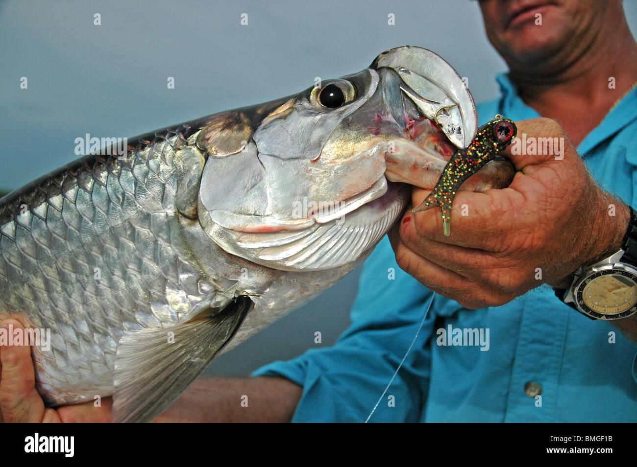 how to fish doa terroreyz