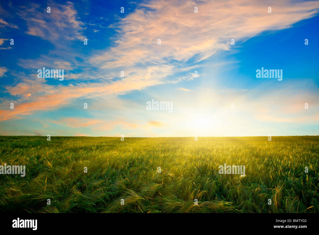 SUNSET OVER WHEAT FIELD Stock Foto