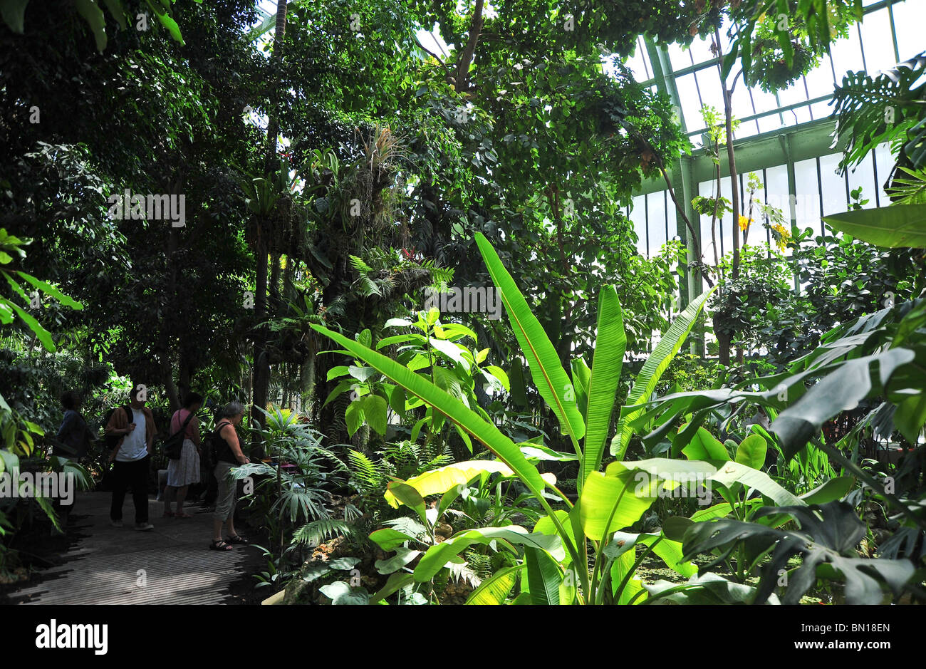 Jardin des plantes tropical greenhouse paris france for Jardin plantes paris