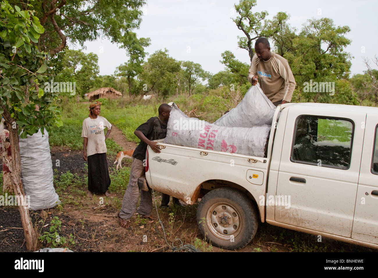 Urban Ghanaian buying charcoal for cooking in bulk from a rural charcoal burner. Stock Photo