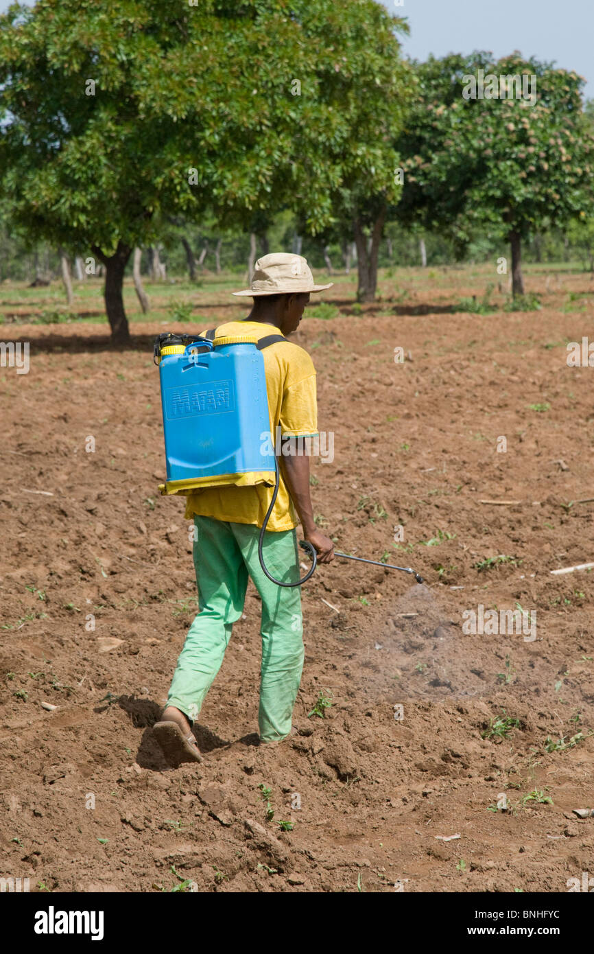 A man from a village in Damango district, Ghana. He is spraying the ground to destroy weeds in preparation for the Stock Photo