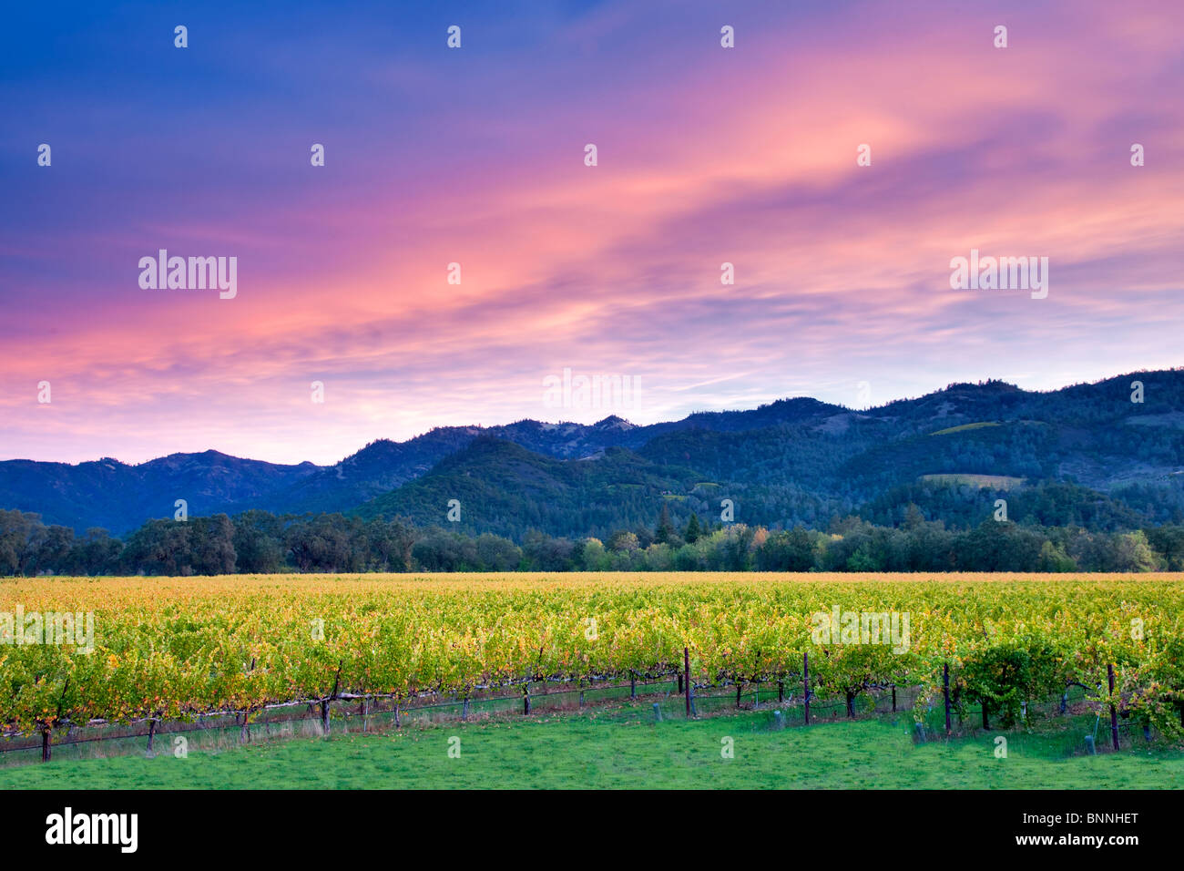 Sunrise over Napa Valley vineyard with fall color. California Stock Foto