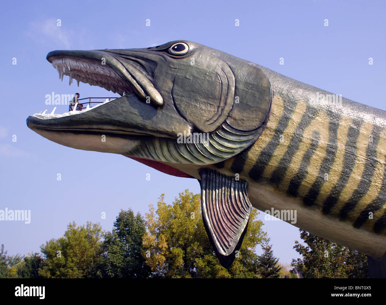 Worlds largest fish at the national freshwater fishing for Freshwater fishing hall of fame