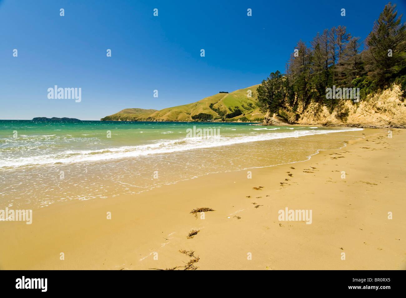 New Zealand, South Island, Marlborough Sounds. Beach at ...