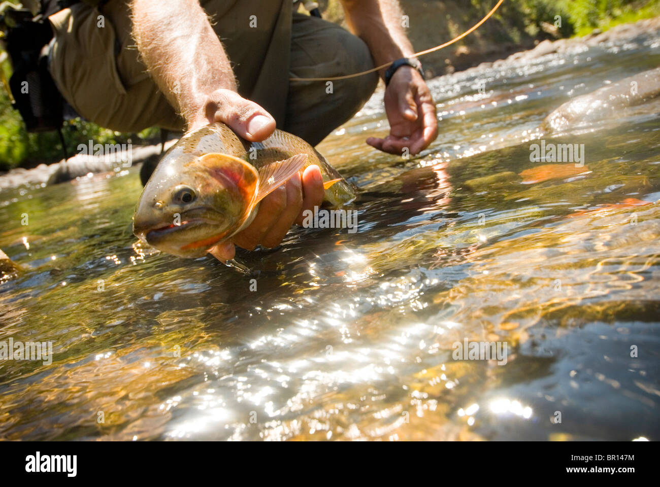 """cutthroat trout and yellowstone national park Also talking were jason rhoten, an fwp fisheries biologist based in absarokee, and phil doepke, a yellowstone national park fisheries biologist """"we wanted to cover more important conservation issues this year,"""" said lyle courtnage, president of the fly fishers """"the native cutthroat trout has become a."""