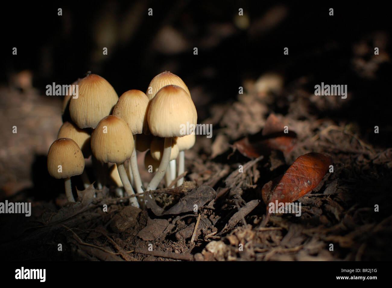 fungi-growing-on-woodland-floor-BR2J1G.j