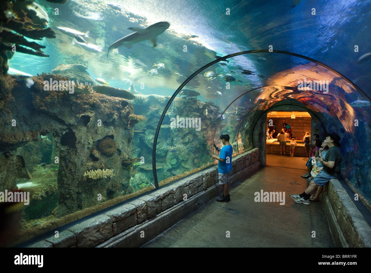 People in the tunnel watching the sharks shark reef for Tropical fish las vegas