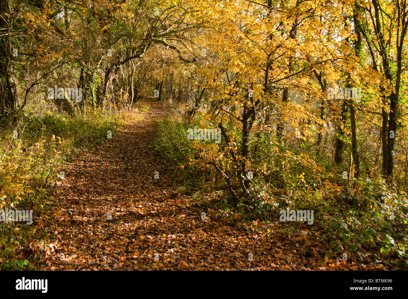 autumn-leaves-cover-a-forest-path-in-arr