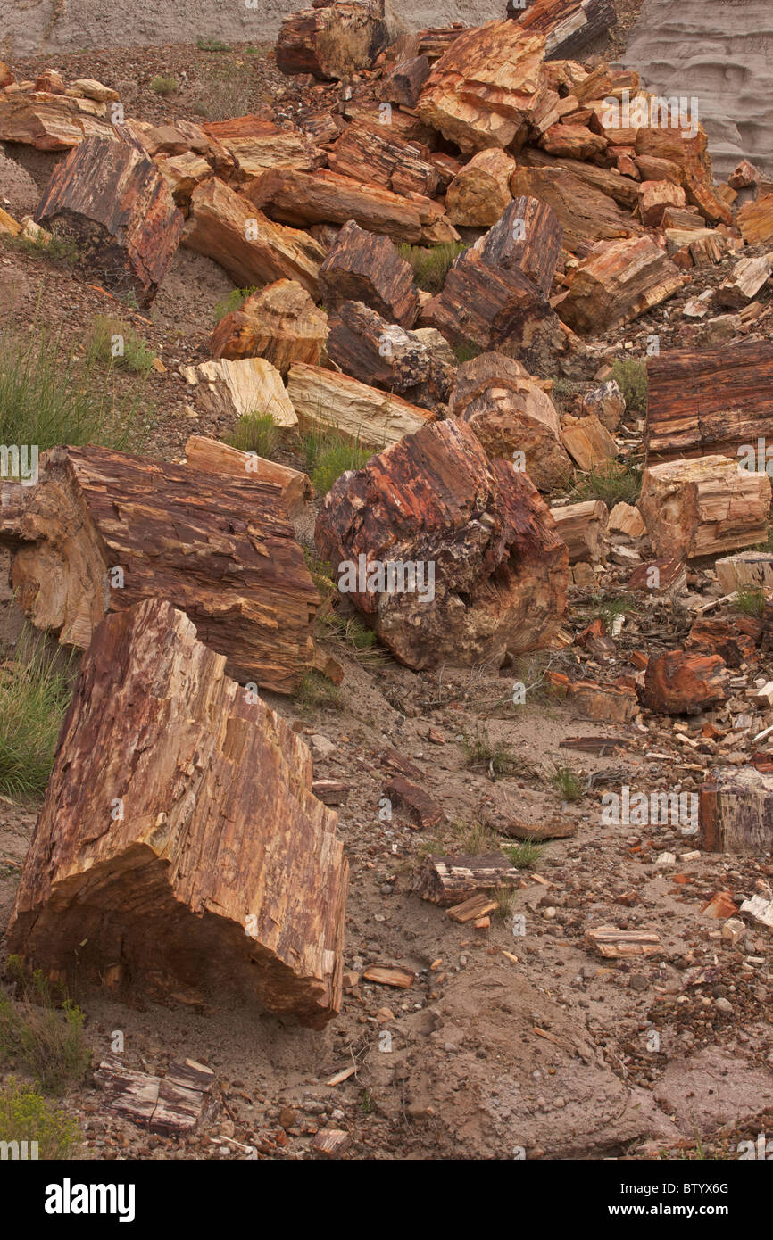 Petrified Logs - Petrified Forest National Park - Arizona - USA -Late Triassic Stock Photo