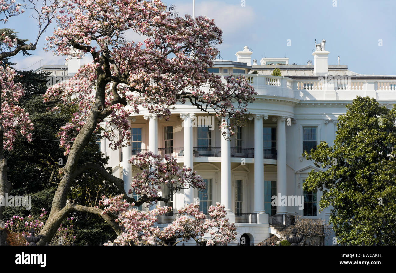 http://c7.alamy.com/comp/BWCAKH/washington-dc-the-white-house-in-spring-springtime-with-magnolia-in-BWCAKH.jpg