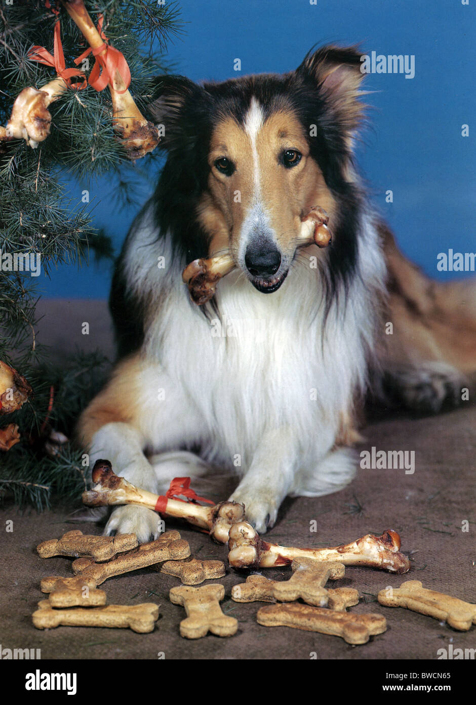 Lassie Dog Food Where To Buy
