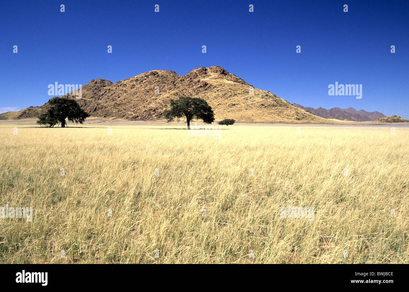 scenery landscape savanna steppe Africa Namibia South-West ...
