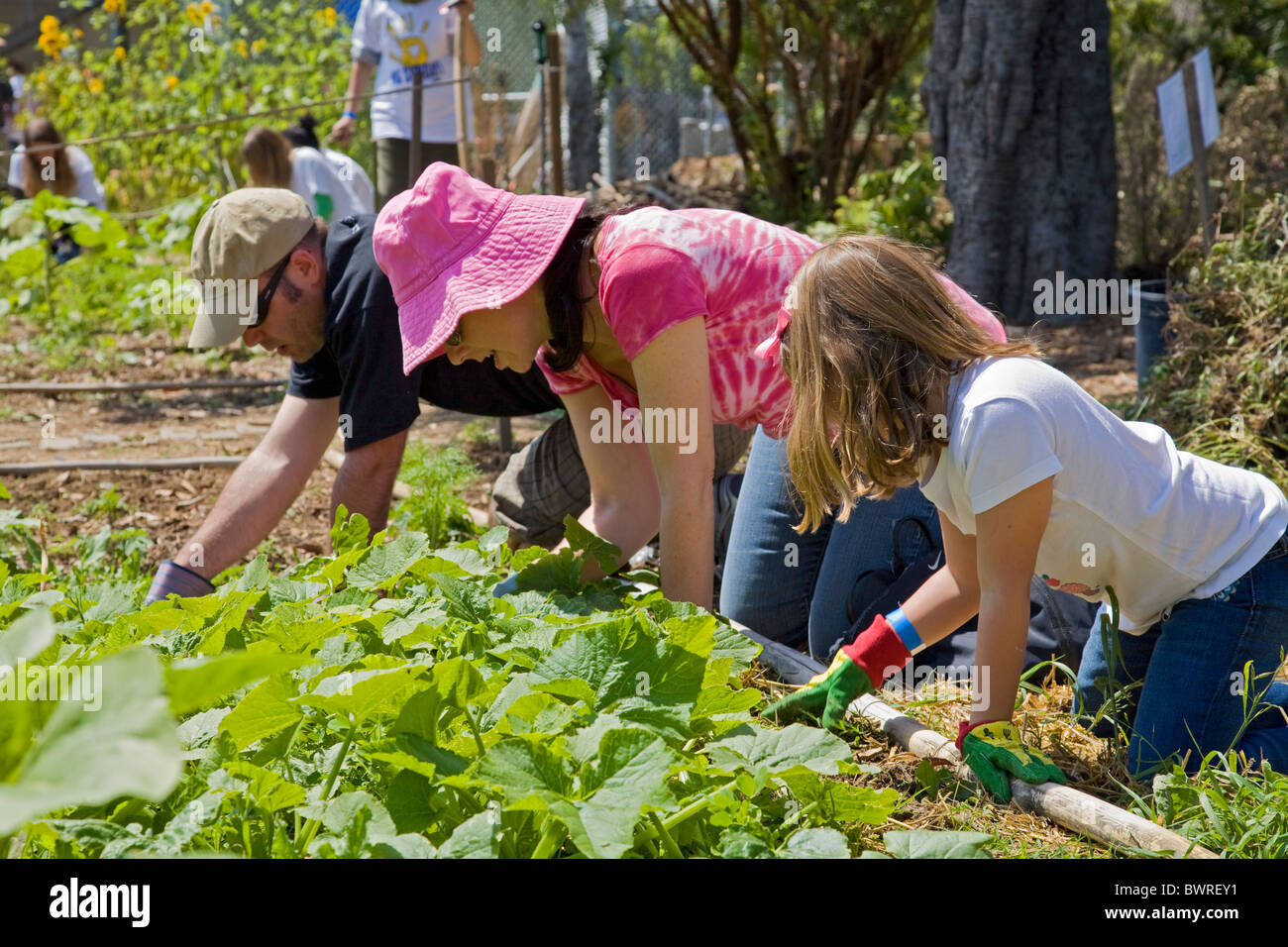 Students Parents And Teachers Work On The Garden At The 24th Street Stock Photo Royalty Free