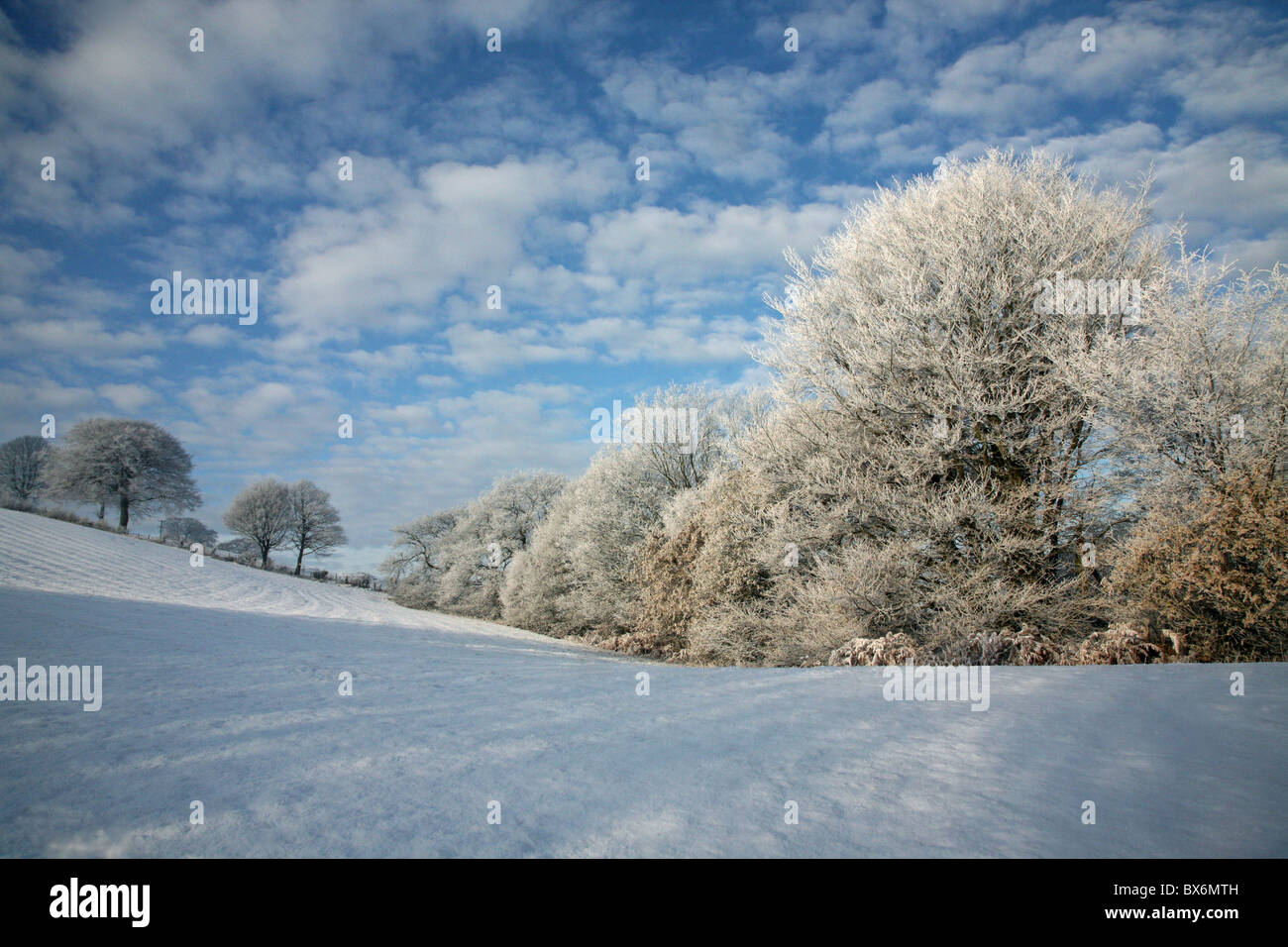 trees-and-bushes-covered-in-hoar-frost-o