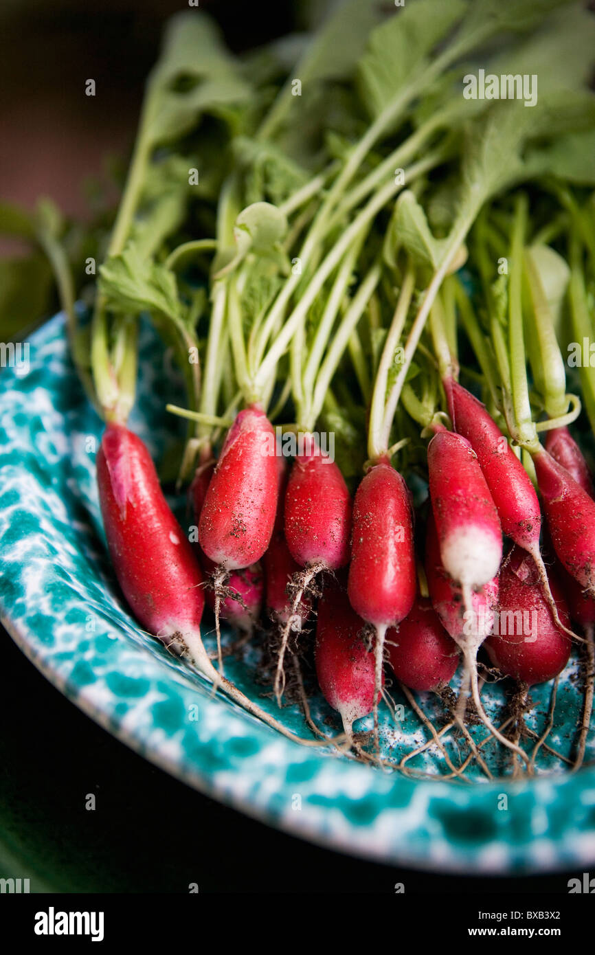 Fresh radish on plate Stock Foto