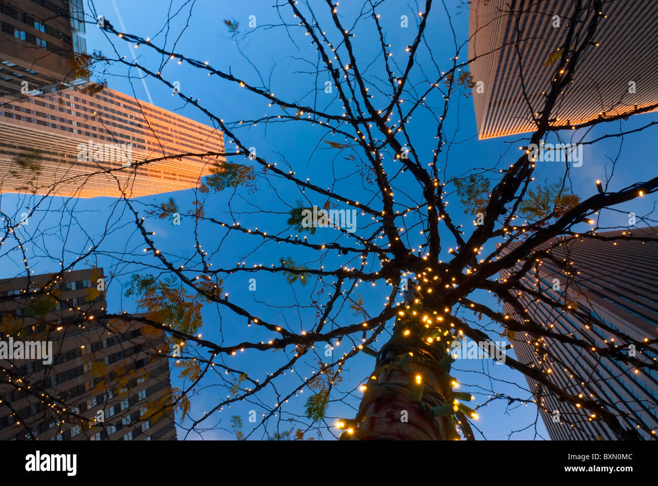 Skyscrapers of Rockefeller Center, looking up at tree lit with holiday white lights, twilight, 6th Avenue, Manhattan Stock Photo