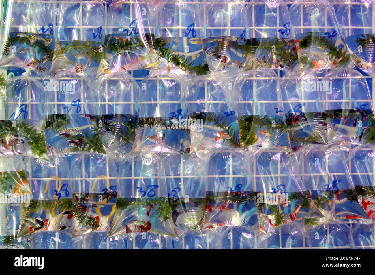 Aquarium pet shop selling goldfish in plastic bags in the for The fish shop