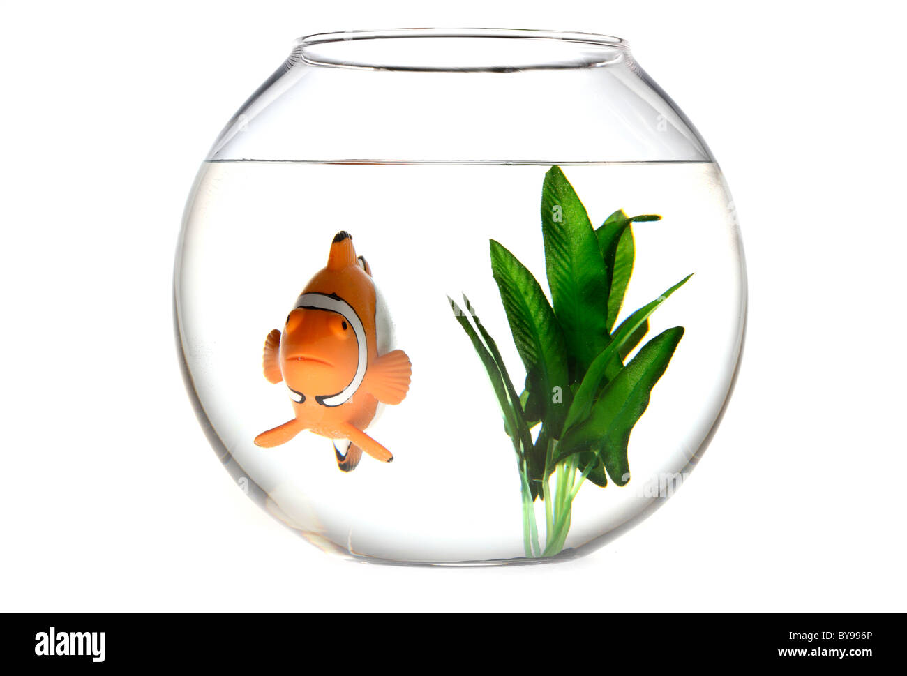 Clown fish nemo in a fish bowl stock photo royalty free for Fish in a bowl