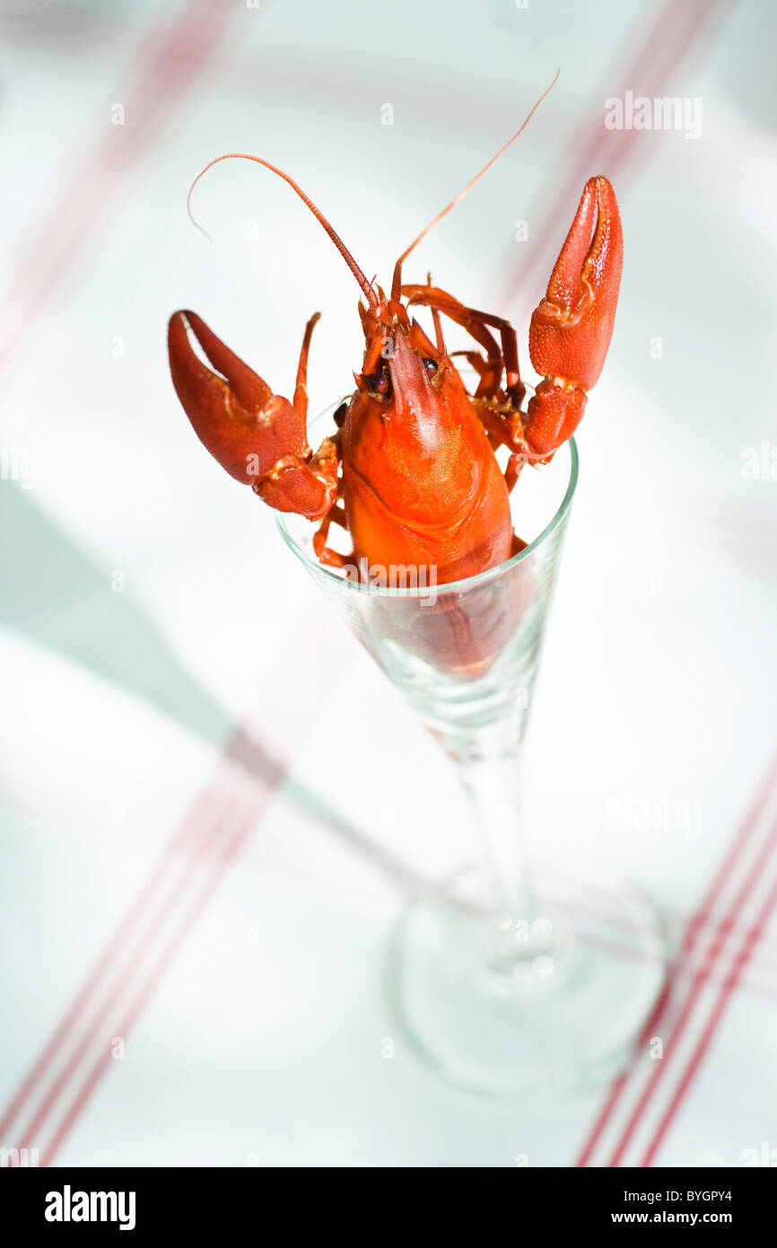 Crayfish in glass Stock Photo