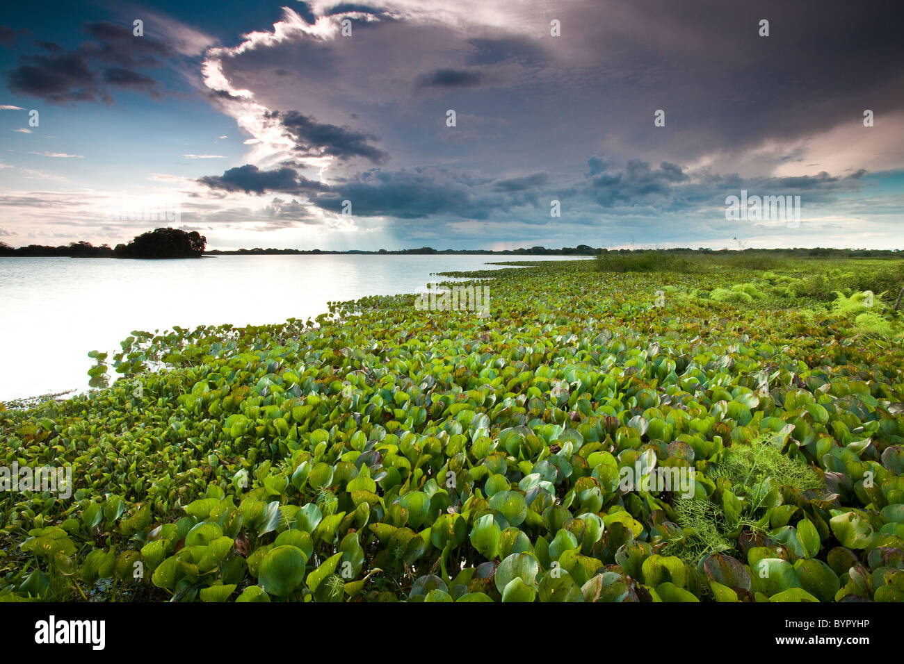 At the lakeside of Refugio de vida Silvestre Cienaga de las Macanas Nature Reserve, in Herrera province, Republic Stock Foto