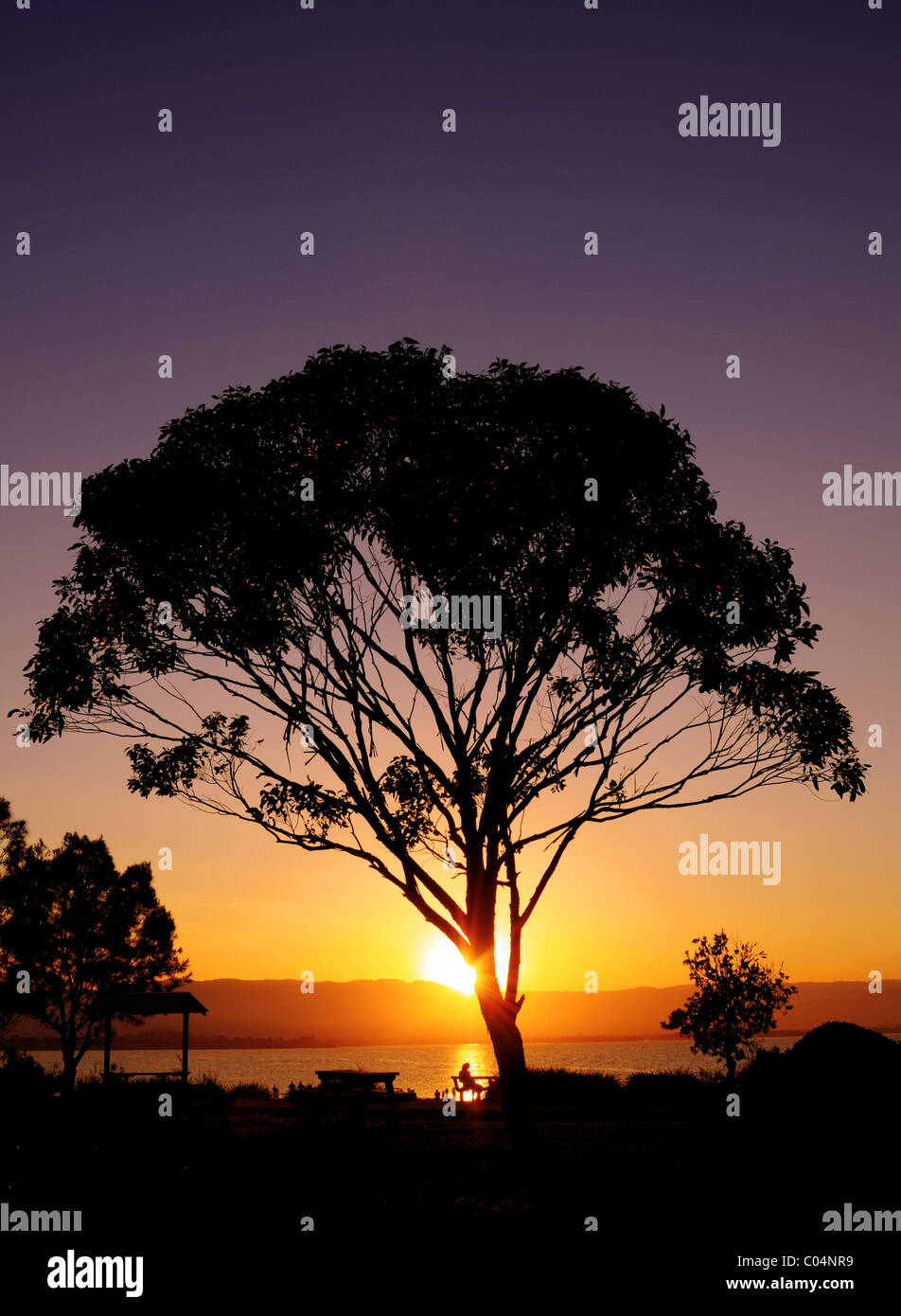 sunset-behind-a-tree-over-lake-illawarra