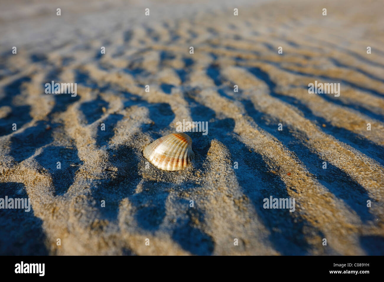 Shell on the beach Stock Foto