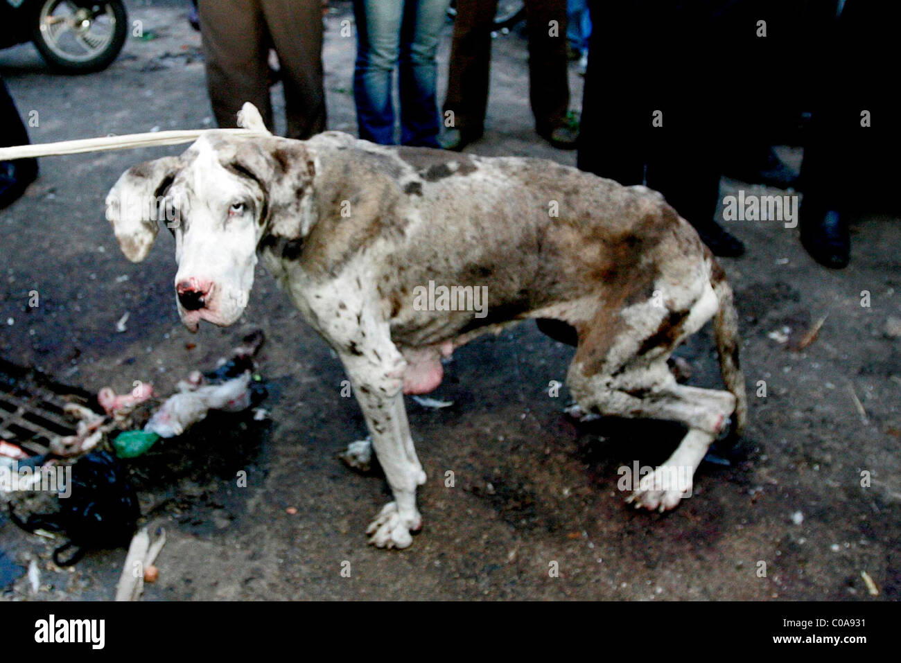 CHINA BLASTED AFTER DOG SLAUGHTER Animal-rights ... - photo#24