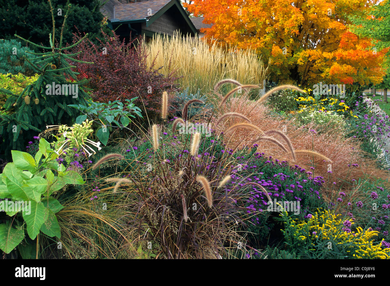 Front yard garden in october includes purple and feather for Ornamental grass front yard