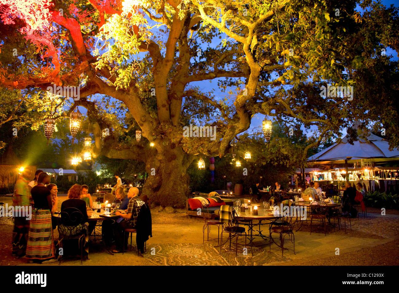 Mojo restaurant at the spier wine estate open air for Mojo restaurant