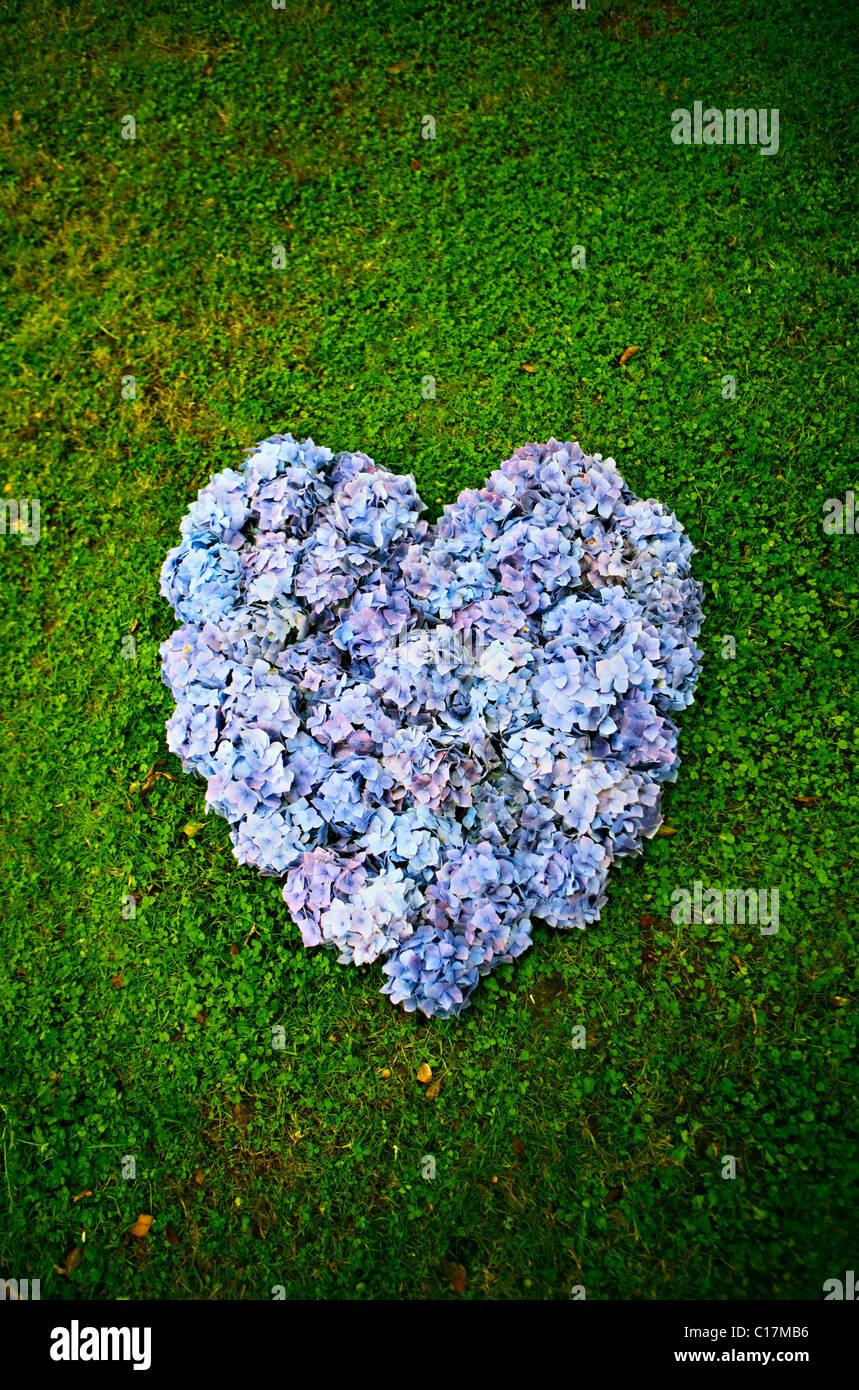 Purple Heart Stock Foto