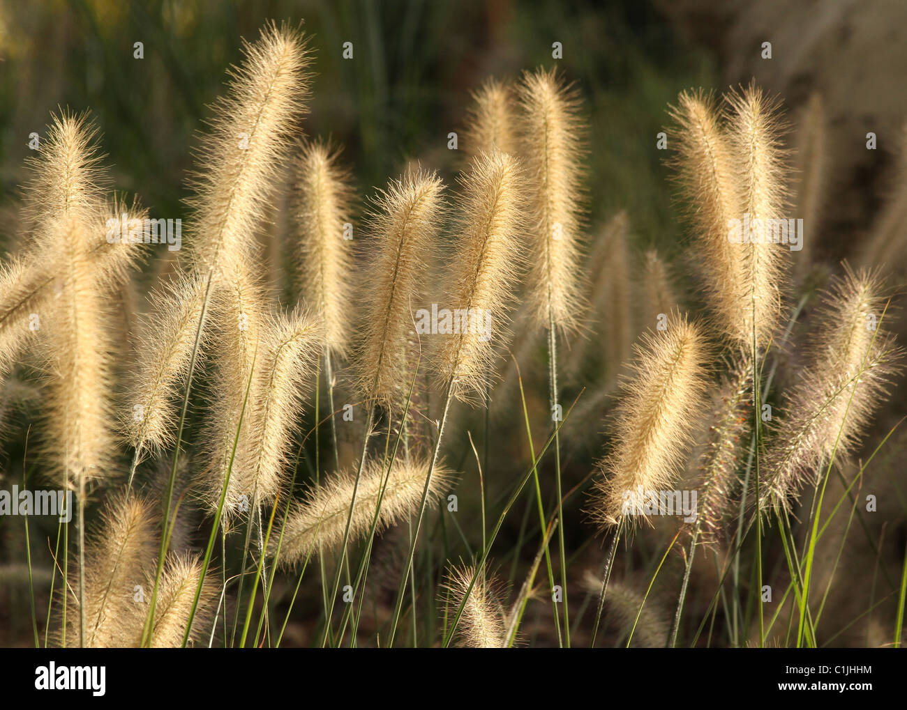 grass kinds group of light the against. Stock Foto