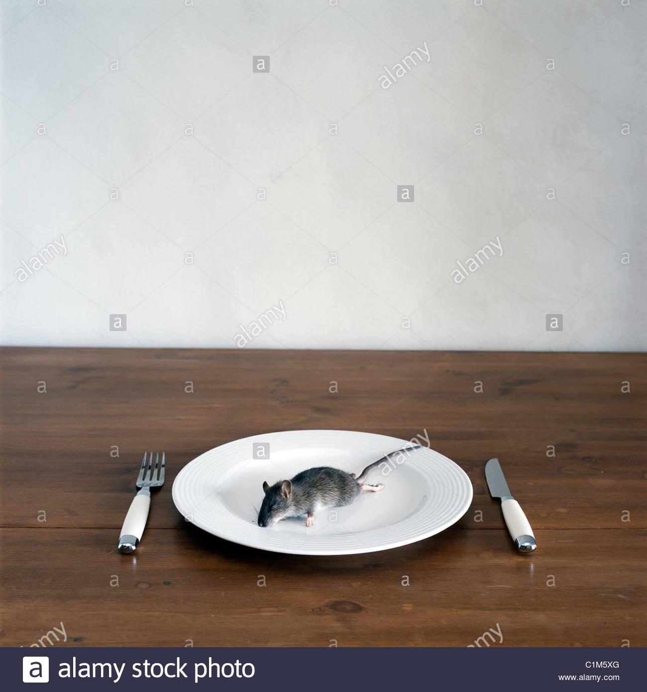 dead-rat-dinner-C1M5XG.jpg