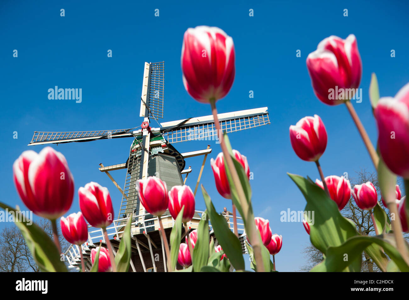 dutch-windmill-with-miller-and-tall-red-