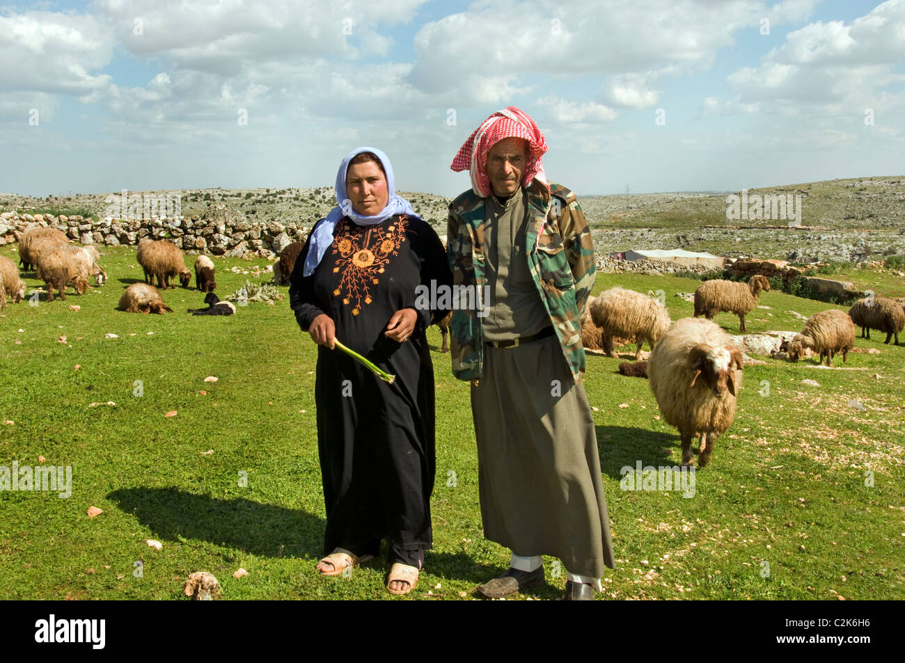sheep ranch muslim single women It should be obvious, yet muslim women are often presented as different, exotic,  or even a symbol of backwardness a middle eastern secondary teacher urged.
