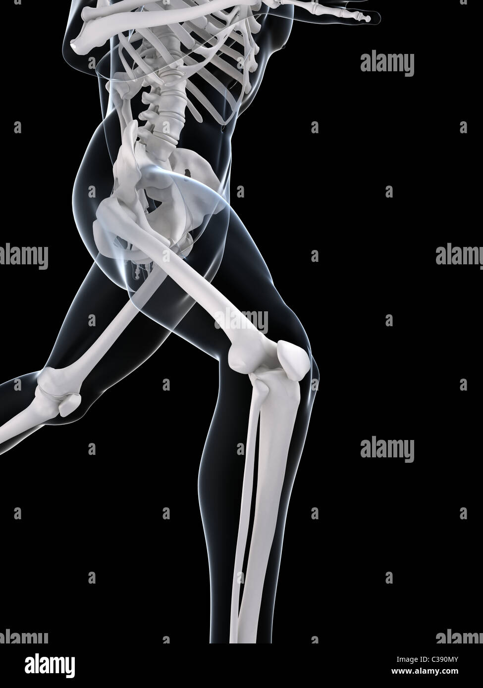 running skeleton Stock Foto