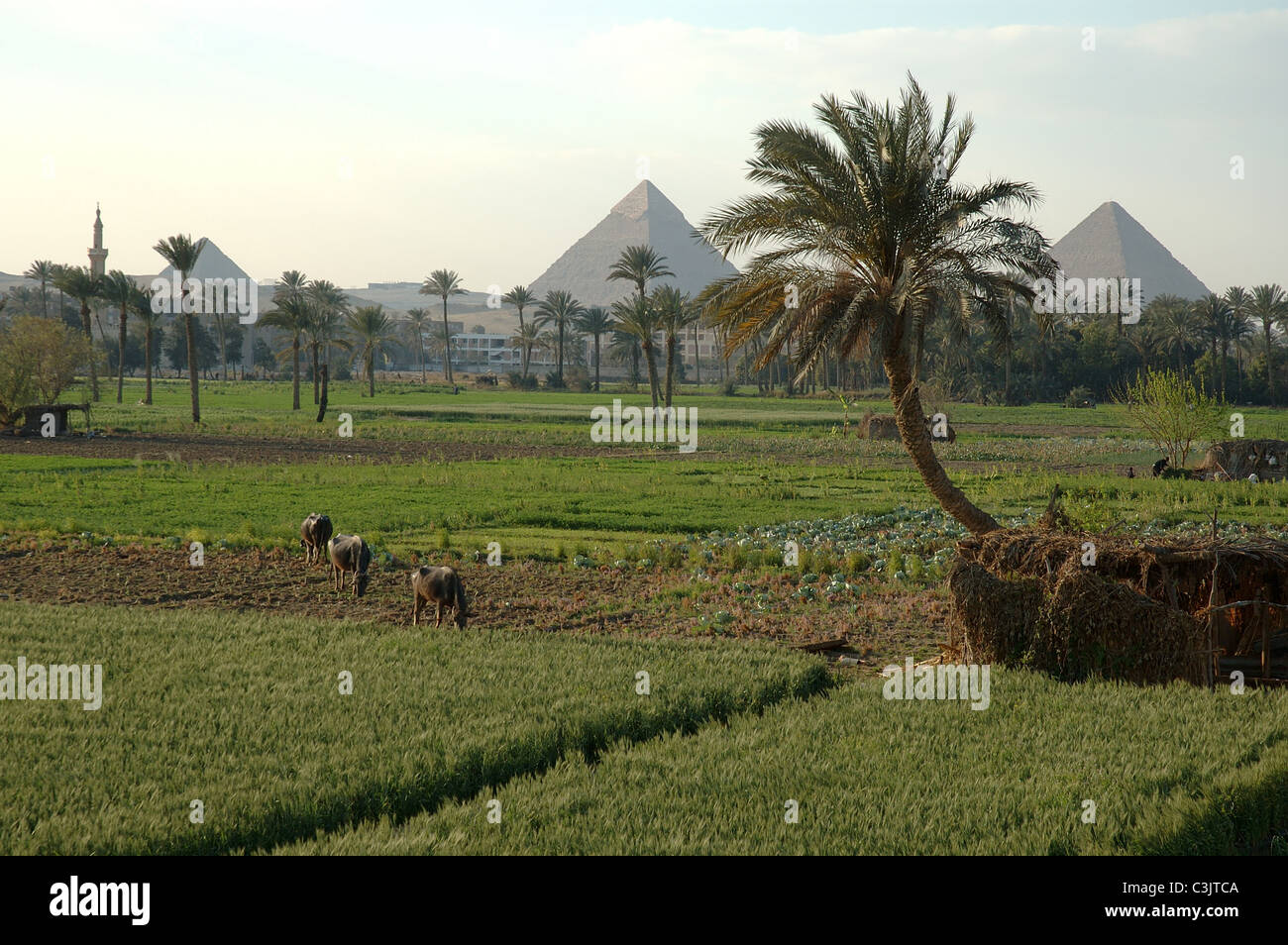 giza egypt the rich soils of the nile river delta in