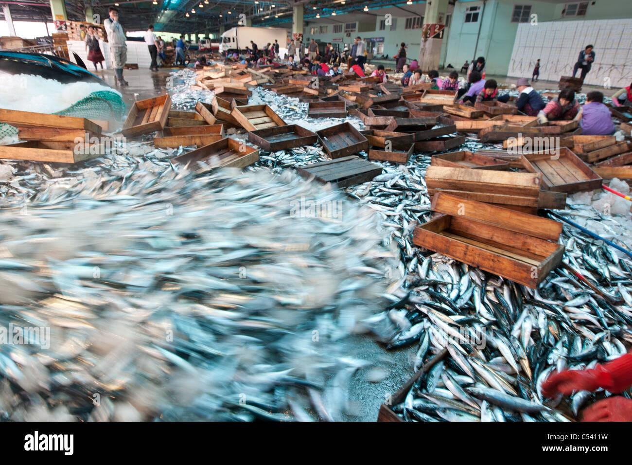 Wholesale fish market in busan pusan south korea stock for Wholesale fish market