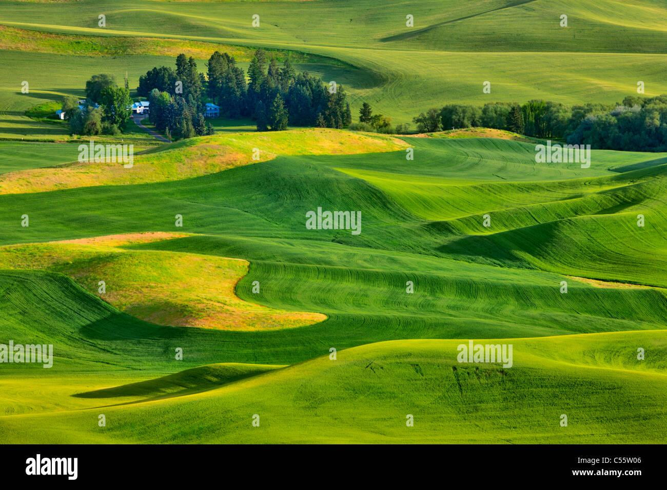 High angle view of green fields, Steptoe Butte, Palouse, Washington State, USA Stock Foto