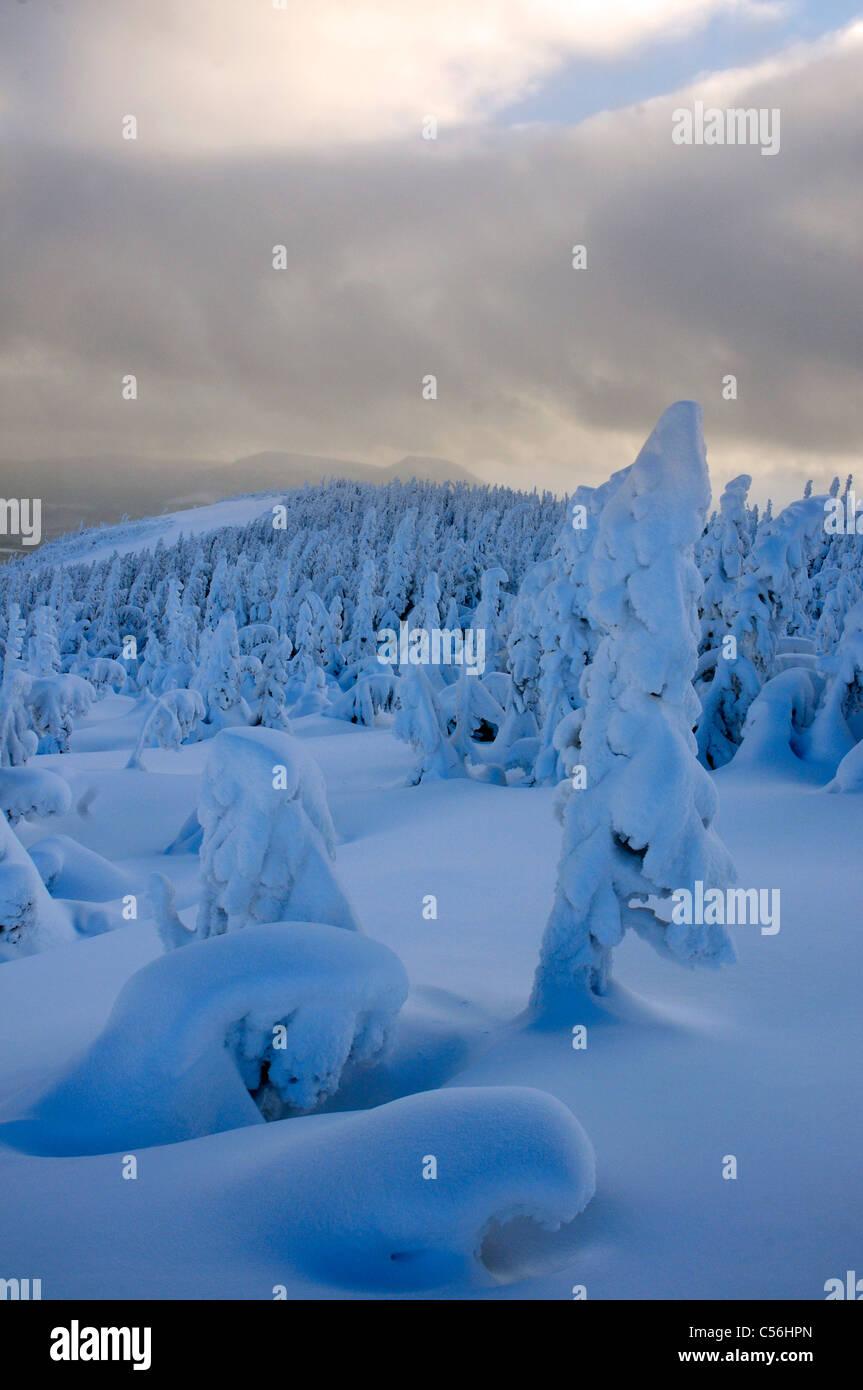 winter-in-parc-de-la-gaspesie-quebec-C56